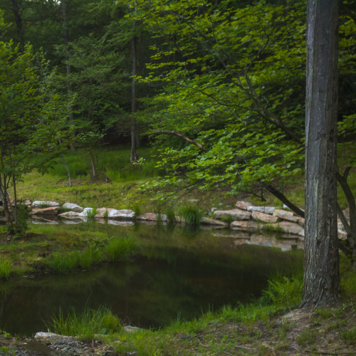 manmade pond with rocks and trees