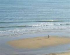 person walking along the beach shore